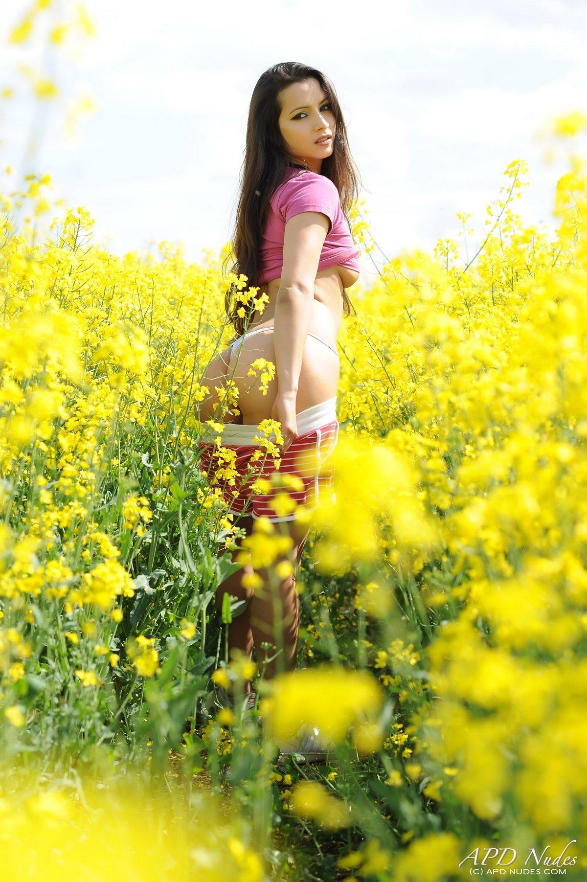 Нагая брюнетка среди желтых полевых цветов